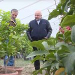 Syrian Armenians take revolutionary steps in Artsakh horticulture